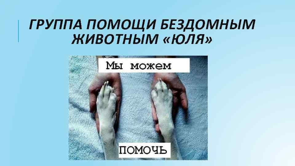 ГРУППА ПОМОЩИ БЕЗДОМНЫМ ЖИВОТНЫМ «ЮЛЯ»
