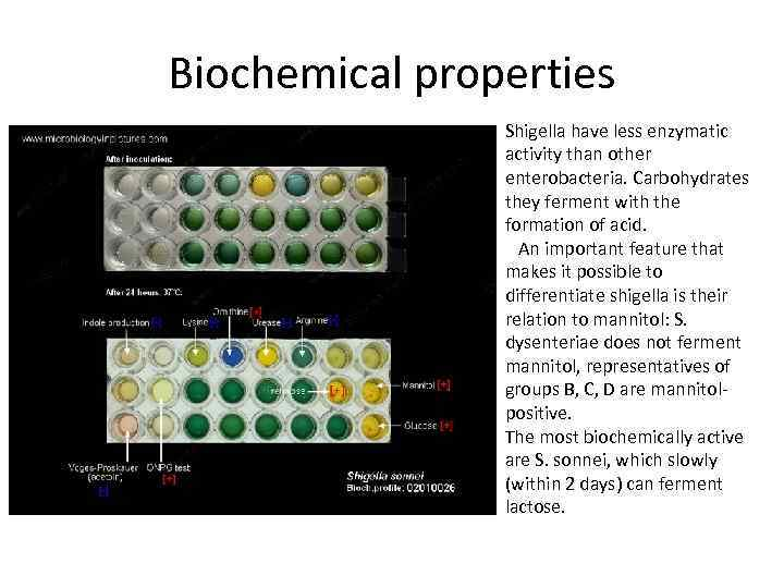 Biochemical properties Shigella have less enzymatic activity than other enterobacteria. Carbohydrates they ferment with