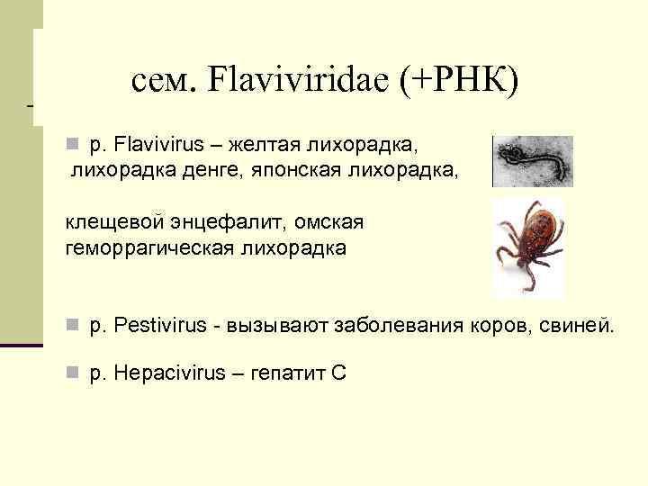 cем. Flaviviridae (+РНК) n р. Flavivirus – желтая лихорадка, лихорадка денге, японская лихорадка, клещевой