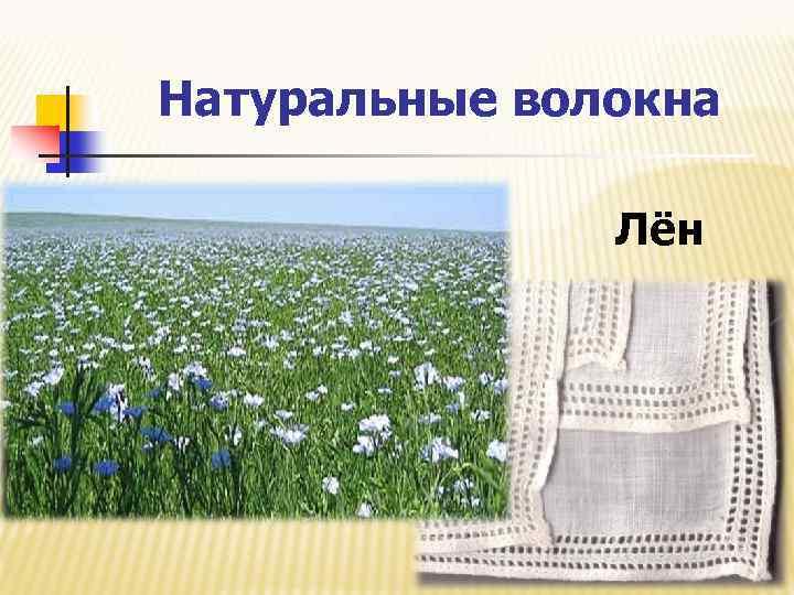 Натуральные волокна Лён