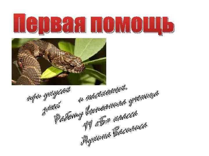 Первая помощь ых. ах укус и насеком ученица при ила змей полн сса у