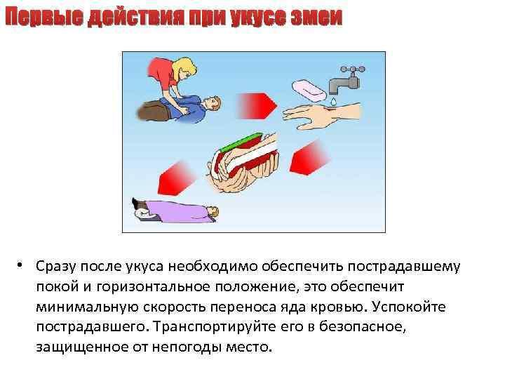 Первые действия при укусе змеи • Сразу после укуса необходимо обеспечить пострадавшему покой и