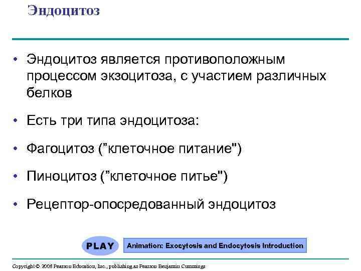 Эндоцитоз • Эндоцитоз является противоположным процессом экзоцитоза, с участием различных белков • Есть три
