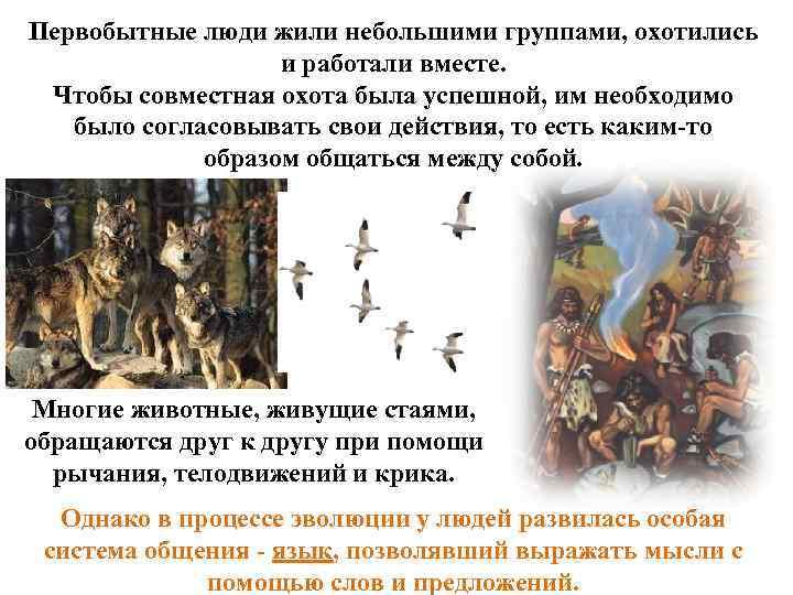 Первобытные люди жили небольшими группами, охотились и работали вместе. Чтобы совместная охота была успешной,