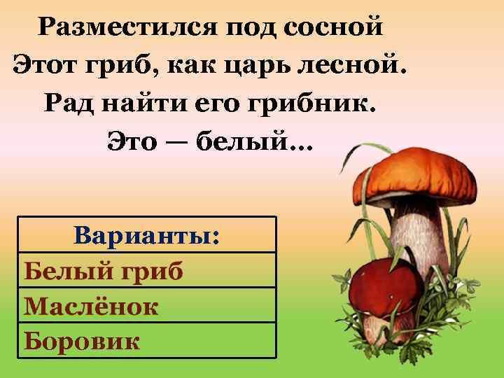 Разместился под сосной Этот гриб, как царь лесной. Рад найти его грибник. Это —