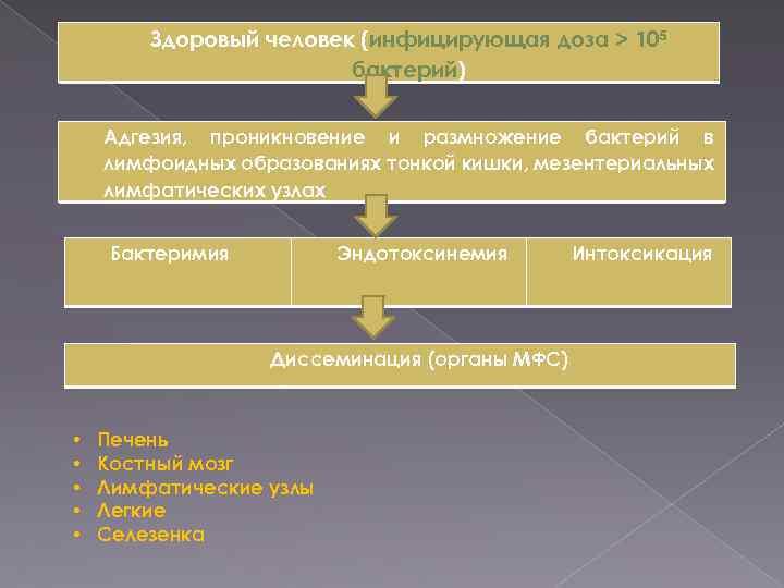 Здоровый человек (инфицирующая доза > 105 бактерий) Адгезия, проникновение и размножение бактерий в лимфоидных