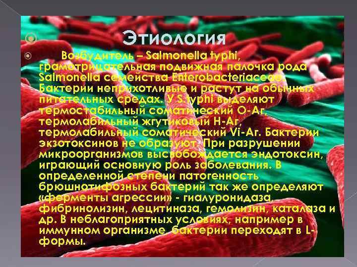 Этиология Возбудитель – Salmonella typhi, грамотрицательная подвижная палочка рода Salmonella семейства Enterobacteriaceae. Бактерии