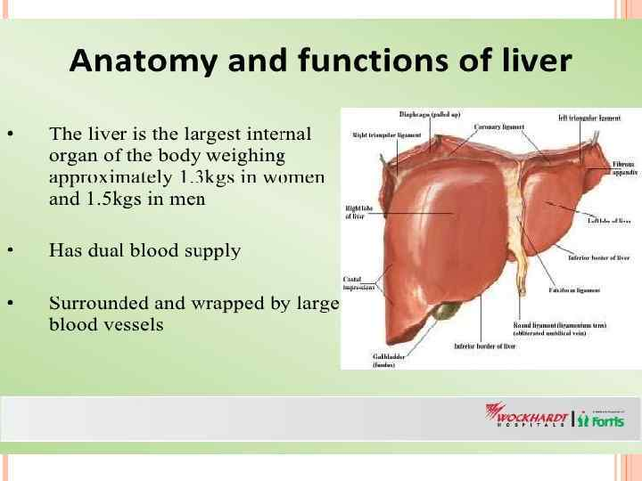 Immunophysiology Of Liver Functions Of Liver And Immune