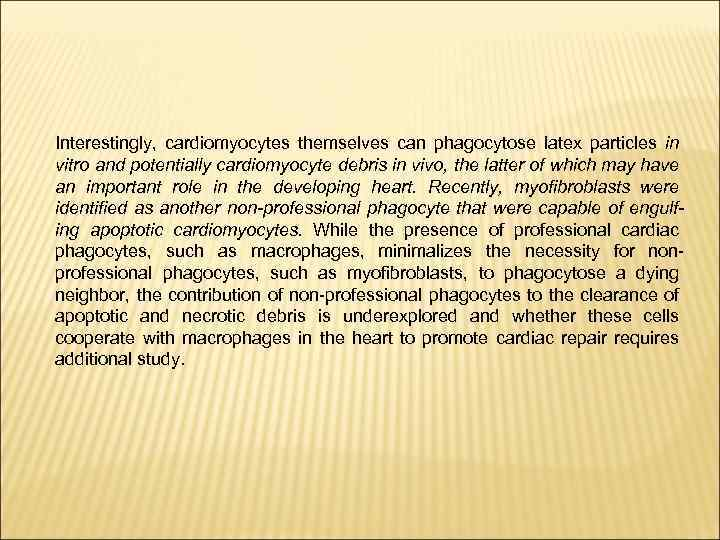 Interestingly, cardiomyocytes themselves can phagocytose latex particles in vitro and potentially cardiomyocyte debris in