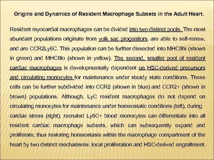 Origins and Dynamics of Resident Macrophage Subsets in the Adult Heart. Resident myocardial macrophages