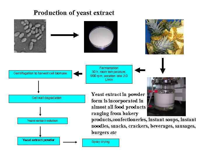 Production of yeast extract Centrifugation to harvest cell biomass Cell wall degradation Yeast extract
