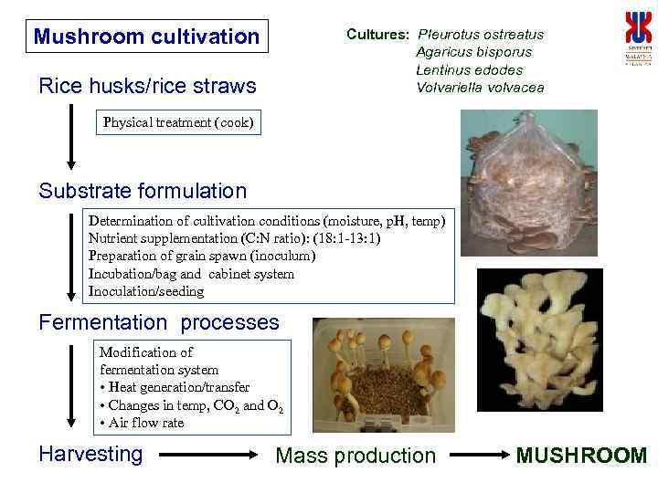 Mushroom cultivation Cultures: Pleurotus ostreatus Agaricus bisporus Lentinus edodes Volvariella volvacea Rice husks/rice straws