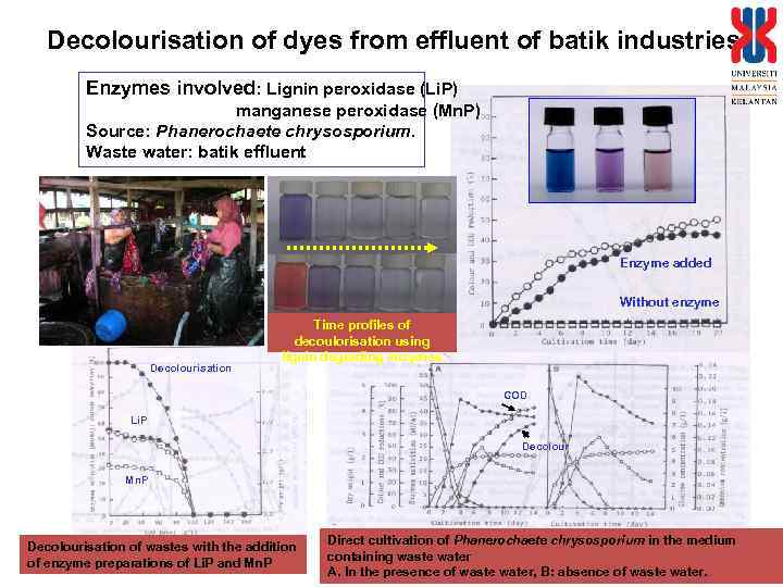 Decolourisation of dyes from effluent of batik industries Enzymes involved: Lignin peroxidase (Li. P)