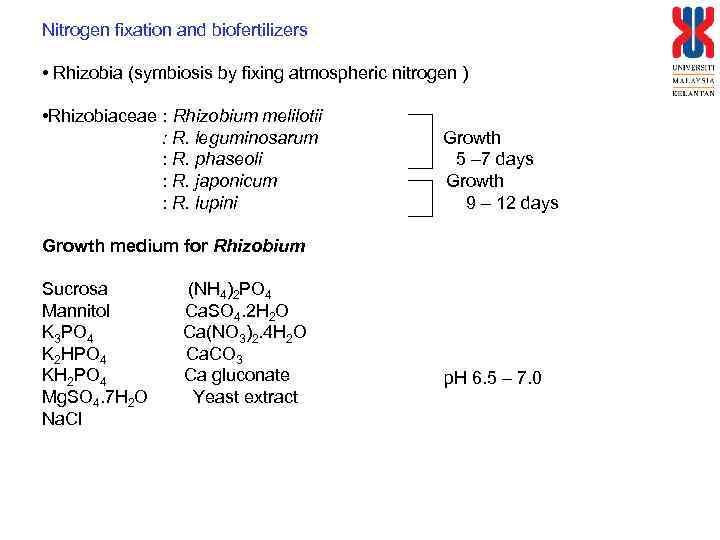 Nitrogen fixation and biofertilizers • Rhizobia (symbiosis by fixing atmospheric nitrogen ) • Rhizobiaceae