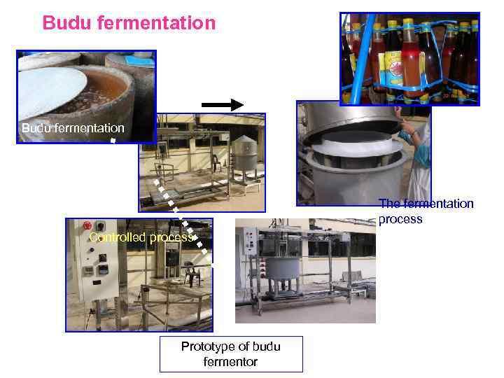 Budu fermentation The fermentation process Controlled process Prototype of budu fermentor The scale up