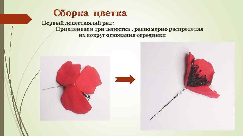 Сборка цветка Первый лепестковый ряд: Приклеиваем три лепестка , равномерно распределяя их вокруг основания