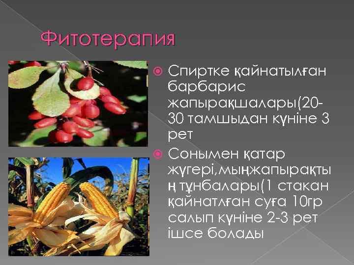 Фитотерапия Спиртке қайнатылған барбарис жапырақшалары(2030 тамшыдан күніне 3 рет Сонымен қатар жүгері, мыңжапырақты ң