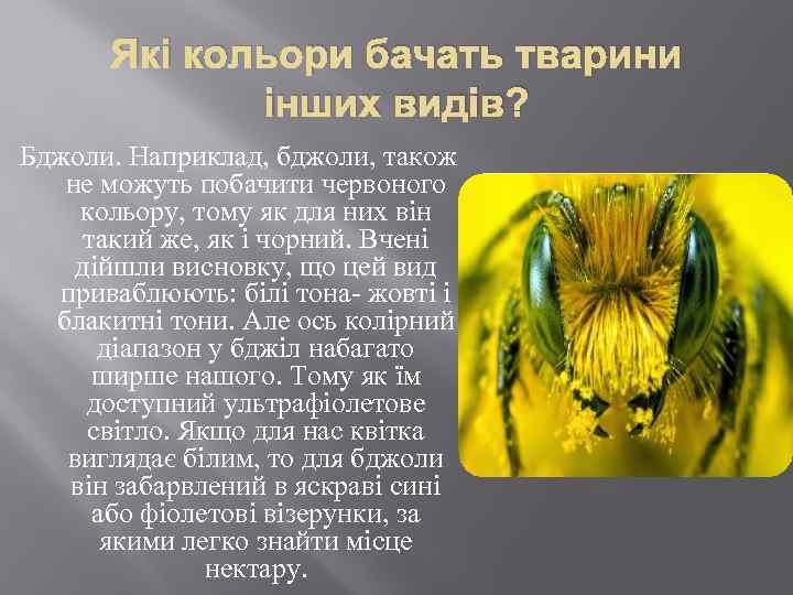 Які кольори бачать тварини інших видів? Бджоли. Наприклад, бджоли, також не можуть побачити червоного