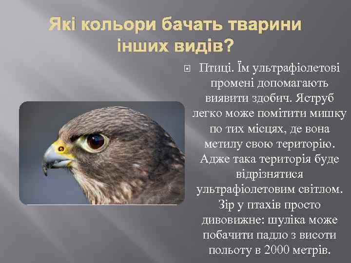 Які кольори бачать тварини інших видів? Птиці. Їм ультрафіолетові промені допомагають виявити здобич. Яструб