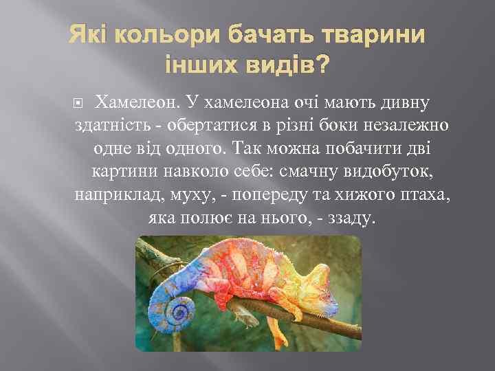 Які кольори бачать тварини інших видів? Хамелеон. У хамелеона очі мають дивну здатність -