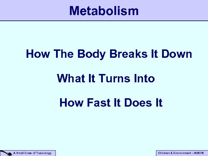Metabolism How The Body Breaks It Down What It Turns Into How Fast It