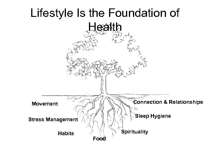 Lifestyle Is the Foundation of Health Connection & Relationships Movement Sleep Hygiene Stress Management