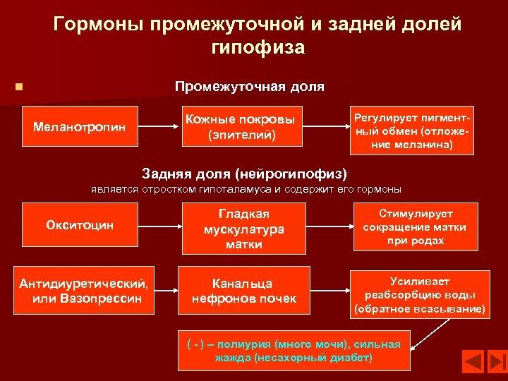 Гормоны промежуточной и задней долей гипофиза Промежуточная доля n Кожные покровы (эпителий) Меланотропин Регулирует