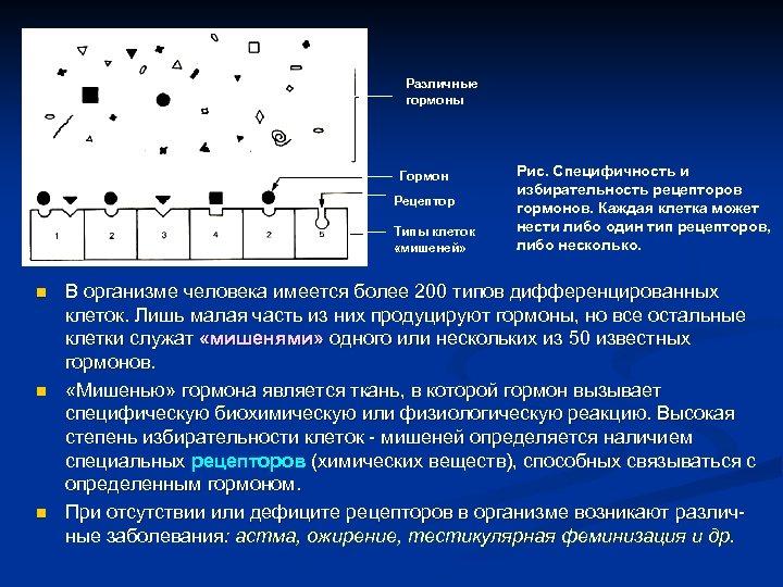 Различные гормоны Гормон Рецептор Типы клеток «мишеней» n n n Рис. Специфичность и избирательность