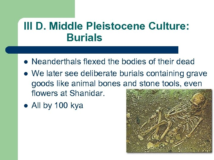 III D. Middle Pleistocene Culture: Burials l l l Neanderthals flexed the bodies of