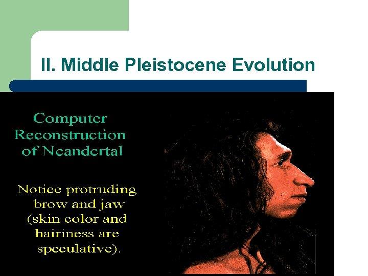 II. Middle Pleistocene Evolution