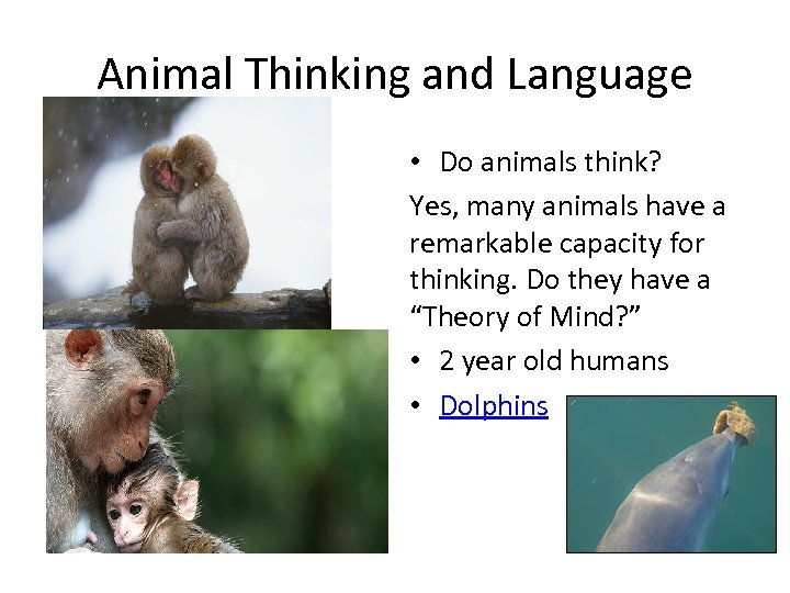 Animal Thinking and Language • Do animals think? Yes, many animals have a remarkable