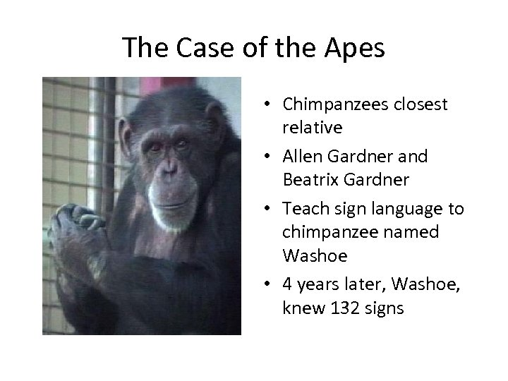 The Case of the Apes • Chimpanzees closest relative • Allen Gardner and Beatrix