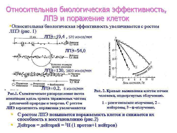 Относительная биологическая эффективность, ЛПЭ и поражение клеток • Относительная биологическая эффективность увеличивается с ростом