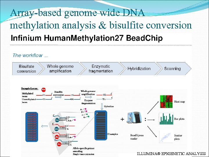 Array-based genome wide DNA methylation analysis & bisulfite conversion ILLUMINA® EPIGENETIC ANALYSIS