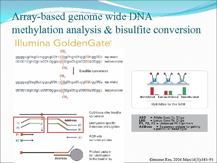 Array-based genome wide DNA methylation analysis & bisulfite conversion Genome Res. 2006 Mar; 16(3):