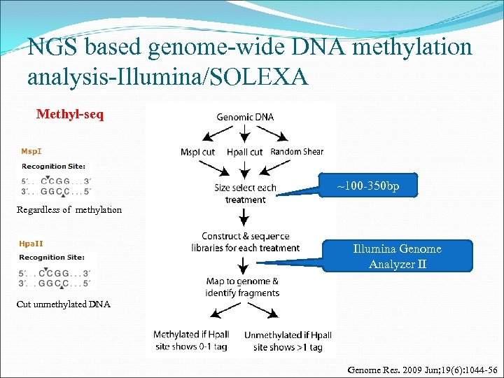 NGS based genome-wide DNA methylation analysis-Illumina/SOLEXA Methyl-seq ~100 -350 bp Regardless of methylation Illumina