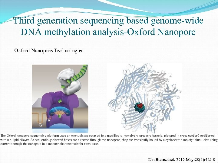 Third generation sequencing based genome-wide DNA methylation analysis-Oxford Nanopore Technologies Nat Biotechnol. 2010 May;