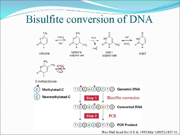 Bisulfite conversion of DNA Bisulfite conversion PCR Proc Natl Acad Sci U S A.