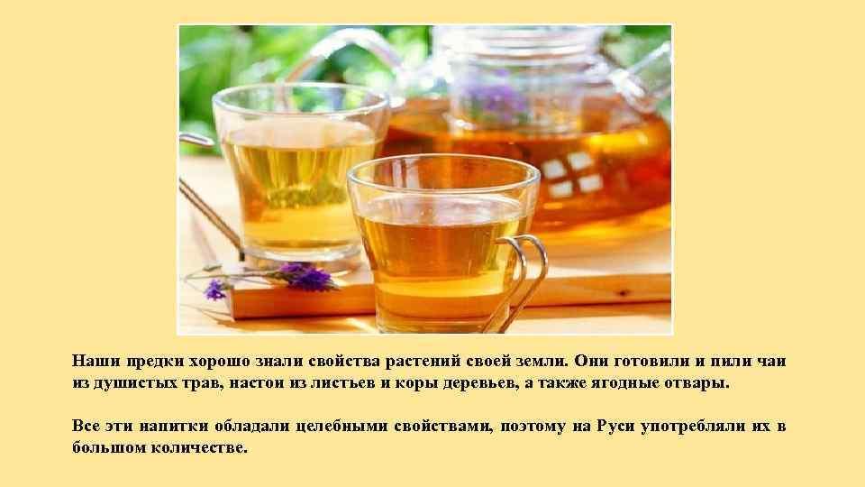 Наши предки хорошо знали свойства растений своей земли. Они готовили и пили чаи из