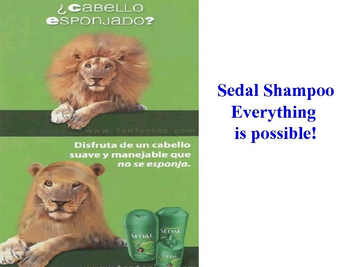 Sedal Shampoo Everything is possible!