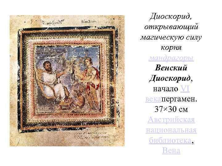 Диоскорид, открывающий магическую силу корня мандрагоры Венский Диоскорид, начало VI векапергамен. 37× 30 см