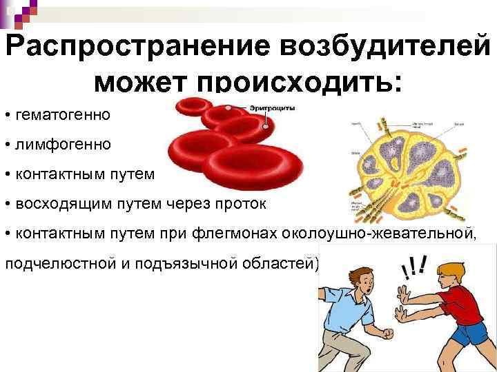 Распространение возбудителей может происходить: • гематогенно • лимфогенно • контактным путем • восходящим путем
