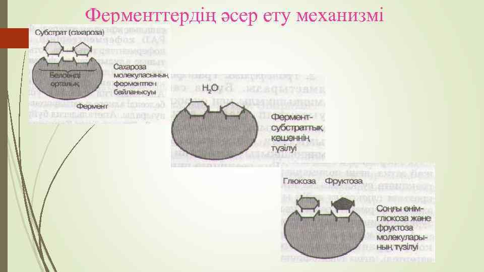 Ферменттердің әсер ету механизмі