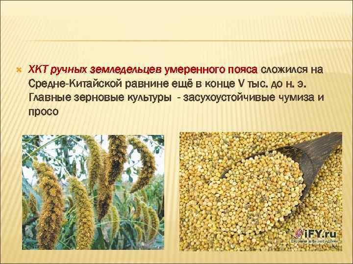 ХКТ ручных земледельцев умеренного пояса сложился на Средне-Китайской равнине ещё в конце V