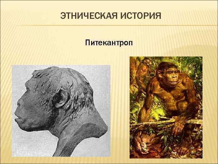 ЭТНИЧЕСКАЯ ИСТОРИЯ Питекантроп