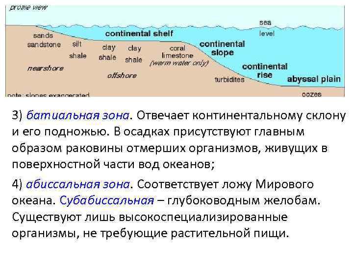 3) батиальная зона. Отвечает континентальному склону и его подножью. В осадках присутствуют главным образом