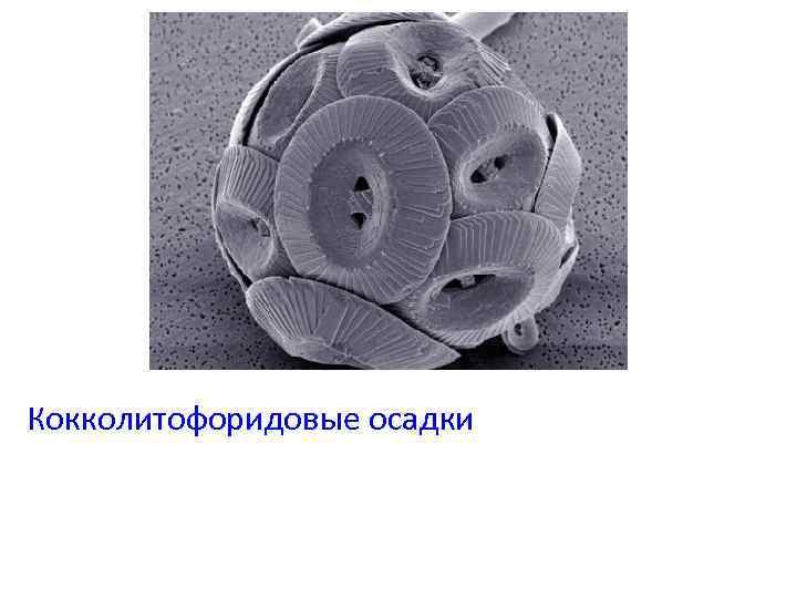 Кокколитофоридовые осадки