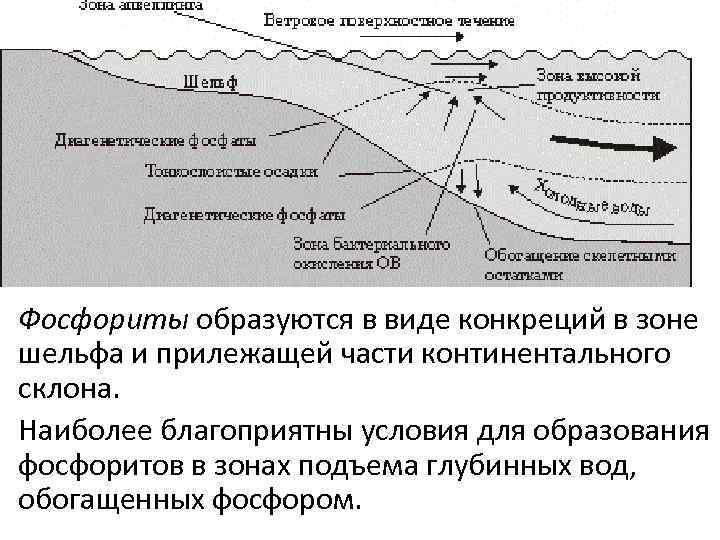Фосфориты образуются в виде конкреций в зоне шельфа и прилежащей части континентального склона. Наиболее
