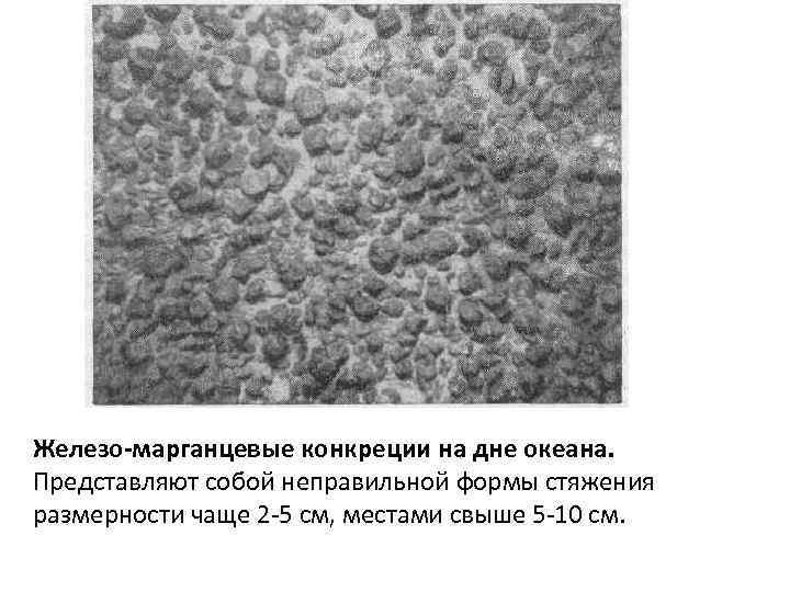 Железо-марганцевые конкреции на дне океана. Представляют собой неправильной формы стяжения размерности чаще 2 -5