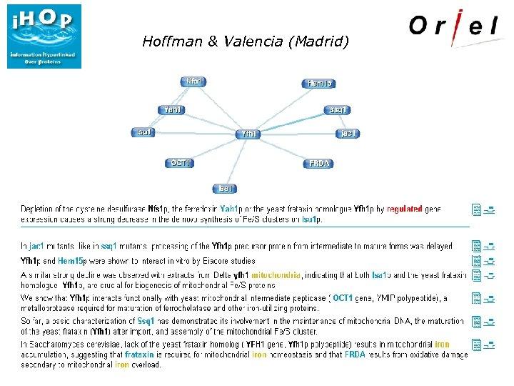 Hoffman & Valencia (Madrid)